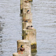 Ducks on poles — Stock Photo