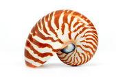 Nautilus shell — Stock Photo