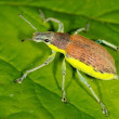 Bug on green leaf - Stock Photo