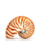 Nautilus shell isolated on white background — Stock Photo