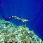 man duiken — Stockfoto