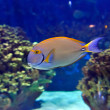 Tropical fishes — Stockfoto #9039736