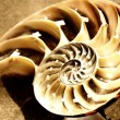 Stock Photo: Nautilus shell section