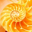 Nautilus shell section — Stock Photo