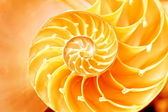 Nautilus shell section — Stock Photo