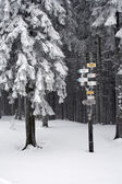 Trekking kış — Stok fotoğraf
