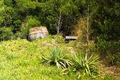 Wyspa šćedro w chorwacji — Zdjęcie stockowe