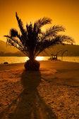 Silhouette of palm — Stockfoto