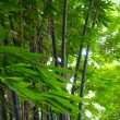Stock Photo: Bamboo leaves in forest