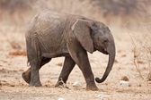 Baby elephant — Stock Photo