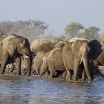 A Group of Elephants at waterhole — Stock Photo
