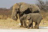 Elephant cow with baby — Stock Photo