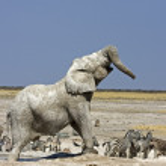 Elephant — Stock Photo #9535941