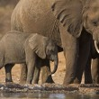 Elephants — Stock Photo #9657346