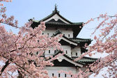 Cherry blossoms and Japanese castle — Stock Photo