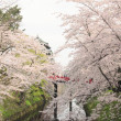 Full bloomed cherry blossoms and japanese castle — Stock Photo #9366017