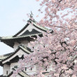 Постер, плакат: Full bloomed cherry blossoms