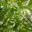 Sun beams and green leaves — Stock Photo #9366517