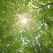 Stock Photo: Sun beams and green leaves