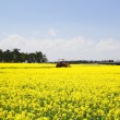 Rapeseed field and tractor — Stock Photo