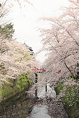 Full bloomed cherry blossoms and japanese castle — Stock Photo