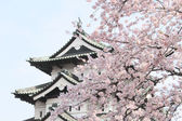 Full bloomed cherry blossoms — Stock Photo