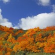 Colorful  leaves in Hachimantai — Stock Photo