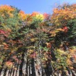 Colorful  leaves in Gully  Matsukawa — Stock Photo