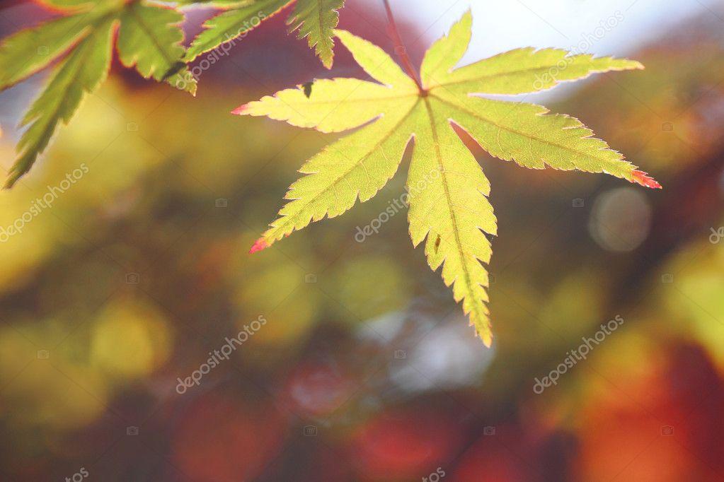 多彩的树叶