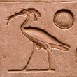 Hieroglyphs Horus temple Edfou — Stock Photo