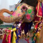 Gangaur Festival-Jaipur elephant portrait — Stock Photo