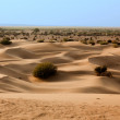 In thar desert near jaisalmer — Stock Photo