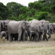 Royalty-Free Stock Photo: Bunch of elephants