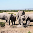 Bunch of elephants — Stock Photo #9709932