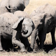 Bunch of elephants — Stock Photo #9709945