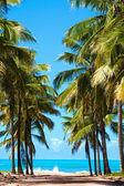 Beach of maracaipe — Stock Photo