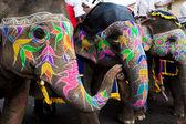 фестиваль гангор-джайпур — Стоковое фото