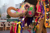 Gangaur Festival-Jaipur elephant portrait — Stock Photo