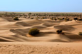 In thar desert near jaisalmer — Foto de Stock