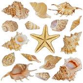 Conchas e estrelas do mar — Foto Stock