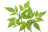 Foliage — Stock Photo