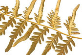 Branch dry fern — Stock Photo
