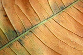 Structure of the dry leaf — Stock Photo