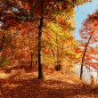 A Fall Woods - New England — Stock Photo