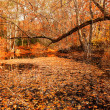 A Fall Woods - New England - Stock Photo