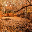 Stock Photo: Fall Woods - New England