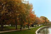 Fall Woods - New England — Stock Photo
