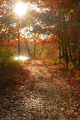 Autumn Paths — Stockfoto