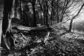 Niskim zimowym słońcu - anglia — Zdjęcie stockowe