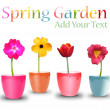 Spring Flower Pots on White — Stock Photo